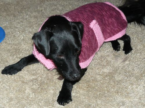 Martys Knitted Dog Coat Free Knitting Pattern Knitted Pet
