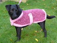 Rosie Dog Coat